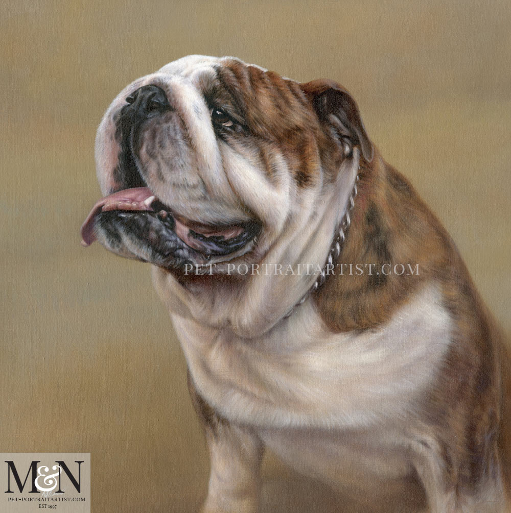 Bull Dog Pet Portrait of Remington