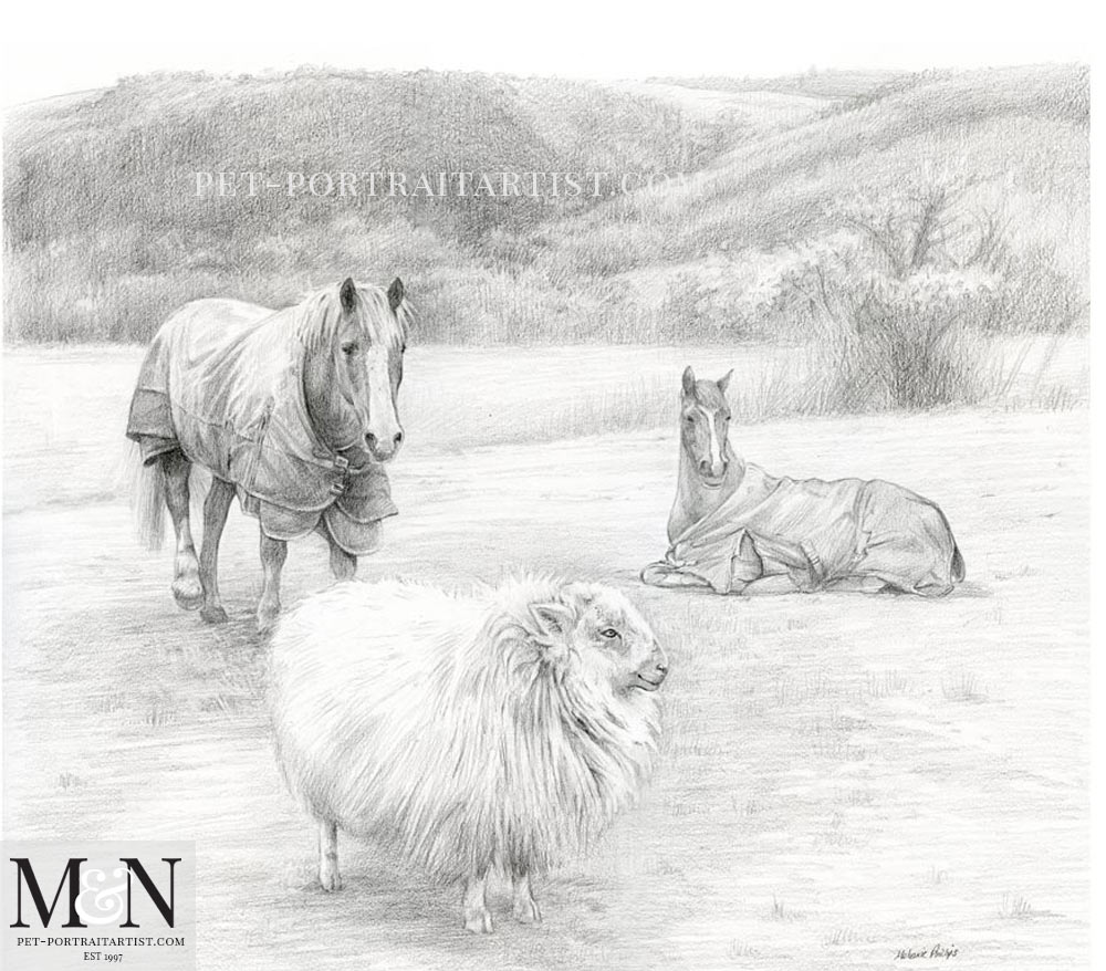 Pencil Portrait of Horses and Sheep