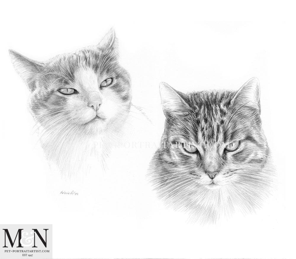 Cat Portrait of Nina and Smasher