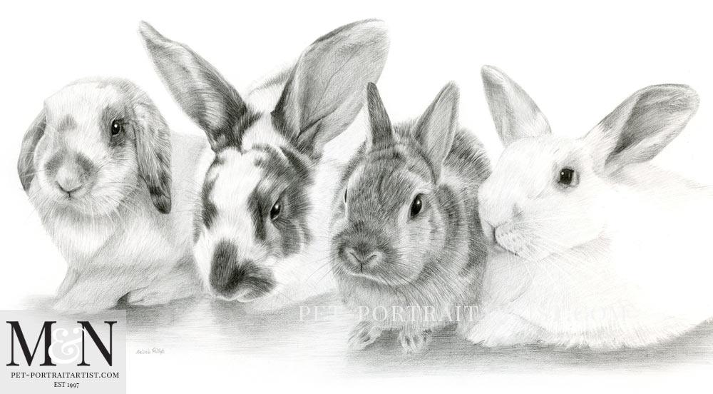 Rabbit Pencil Drawing Melanie Nicholas Pet Portraits