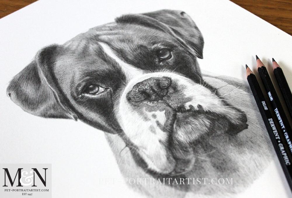Boxer Dog Pencil Portrait of Milo