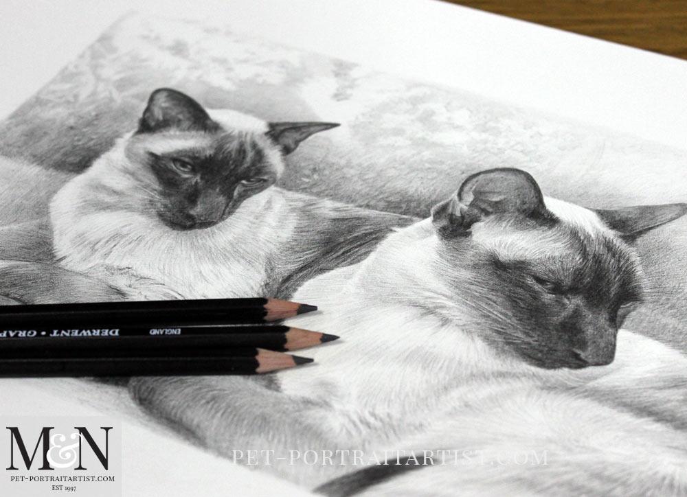 Siamese Cats Pencil Portrait of Tai & Chi