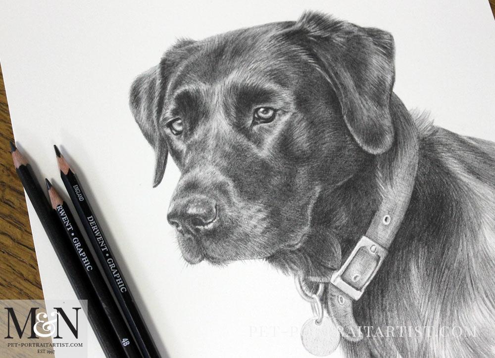 Pencil Pet Portrait of Bix
