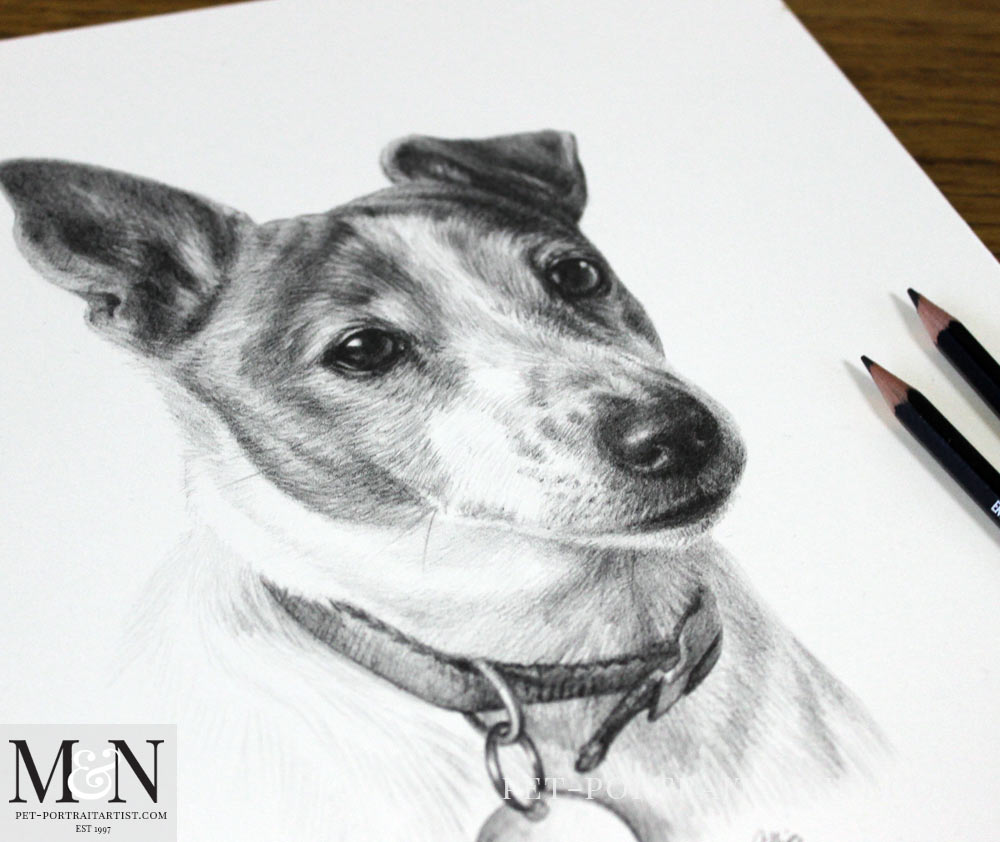 Pencil Pet Portrait of Judy