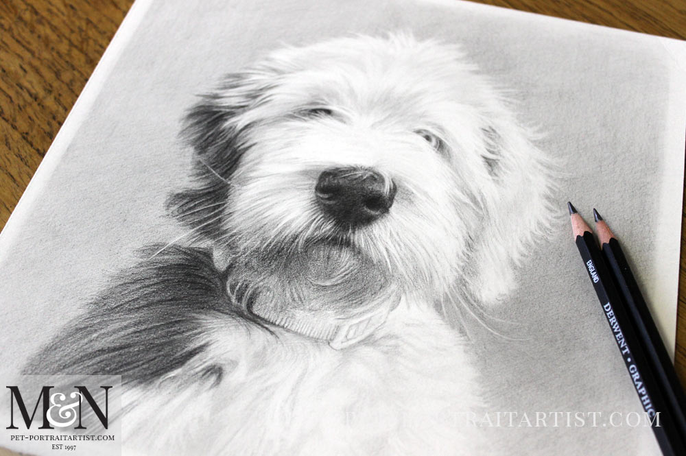 Pencil Drawing of Barney