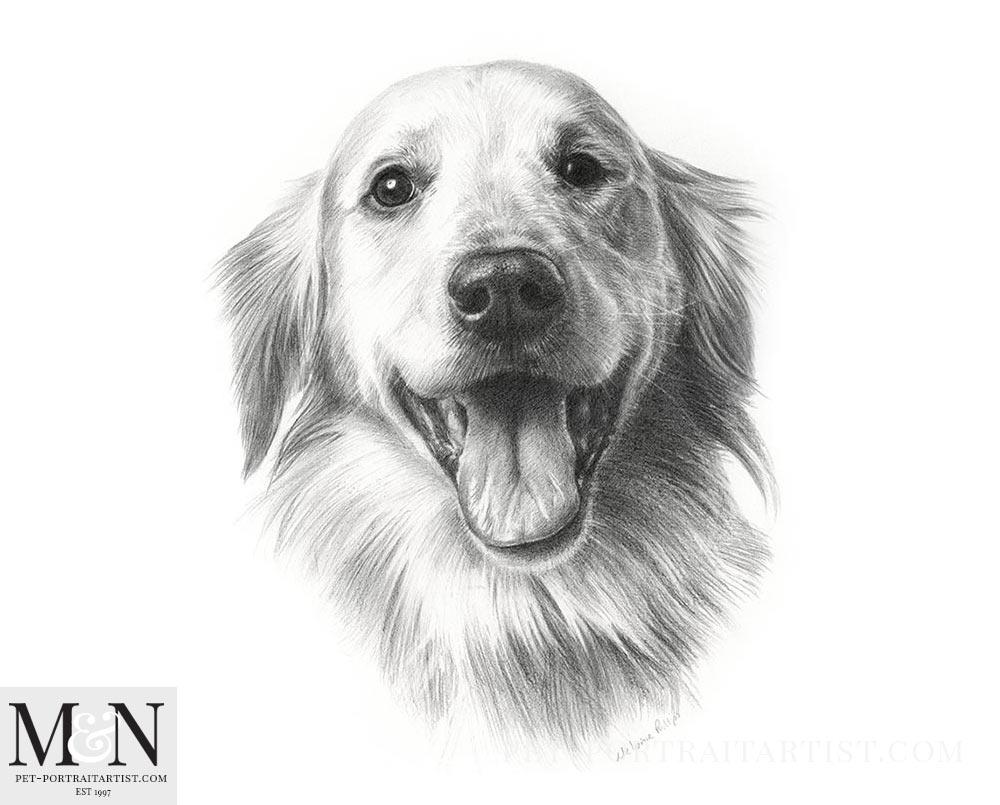 Pencil Pet Portrait of Doc