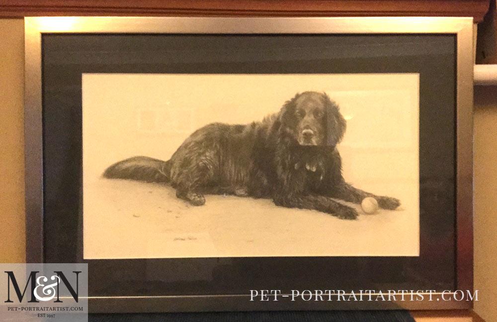 Pencil Pet Portrait of Shep