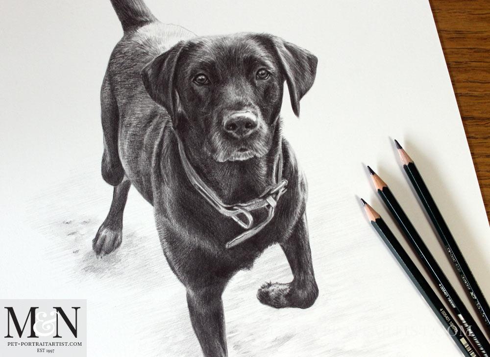 Pencil Pet Portrait of Floss