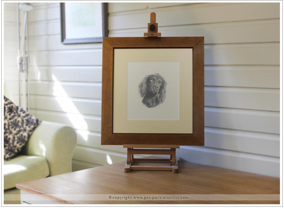 Cocker Spaniel Pencil Pet Portrait