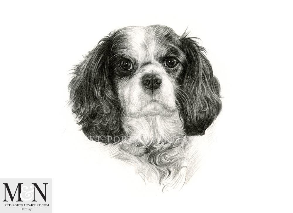 Pencil Pet Portrait of Gianni