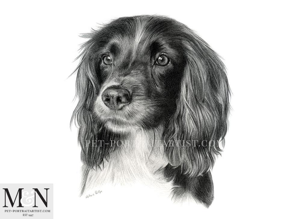 Pencil Pet Portrait of Ella