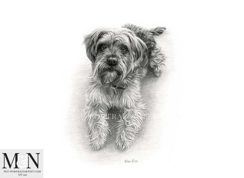 Pencil Drawing of Murphy