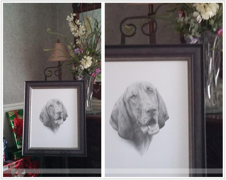 Pencil Pet Portrait of Daisy
