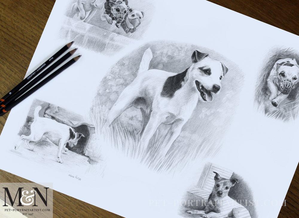 Pencil Pet Portraits Montage