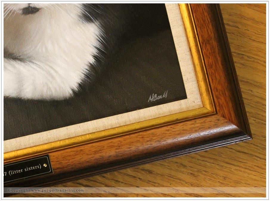 cats portraits