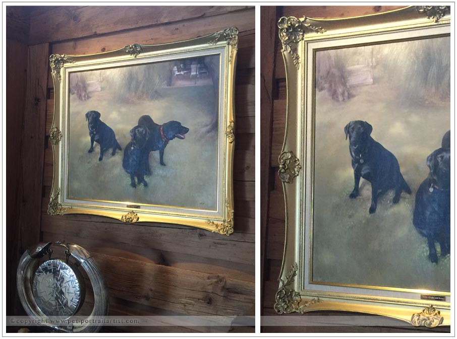 dog-pet-portraits-1