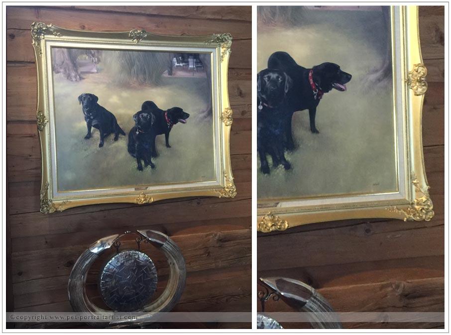 dog-pet-portraits-2