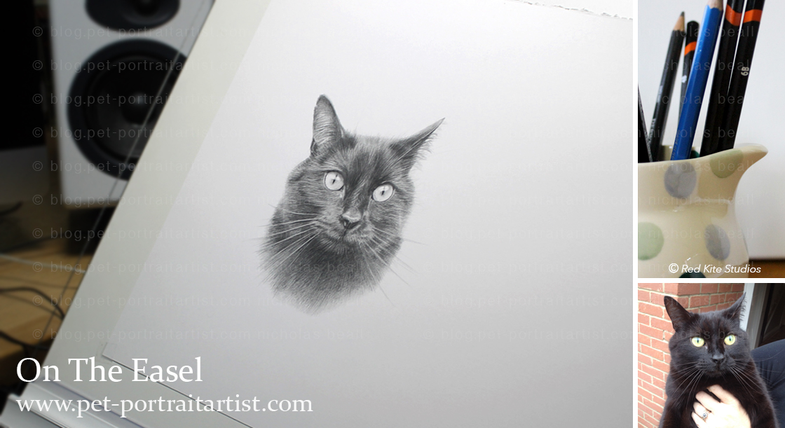 cat-pencil-pet-portraits-1