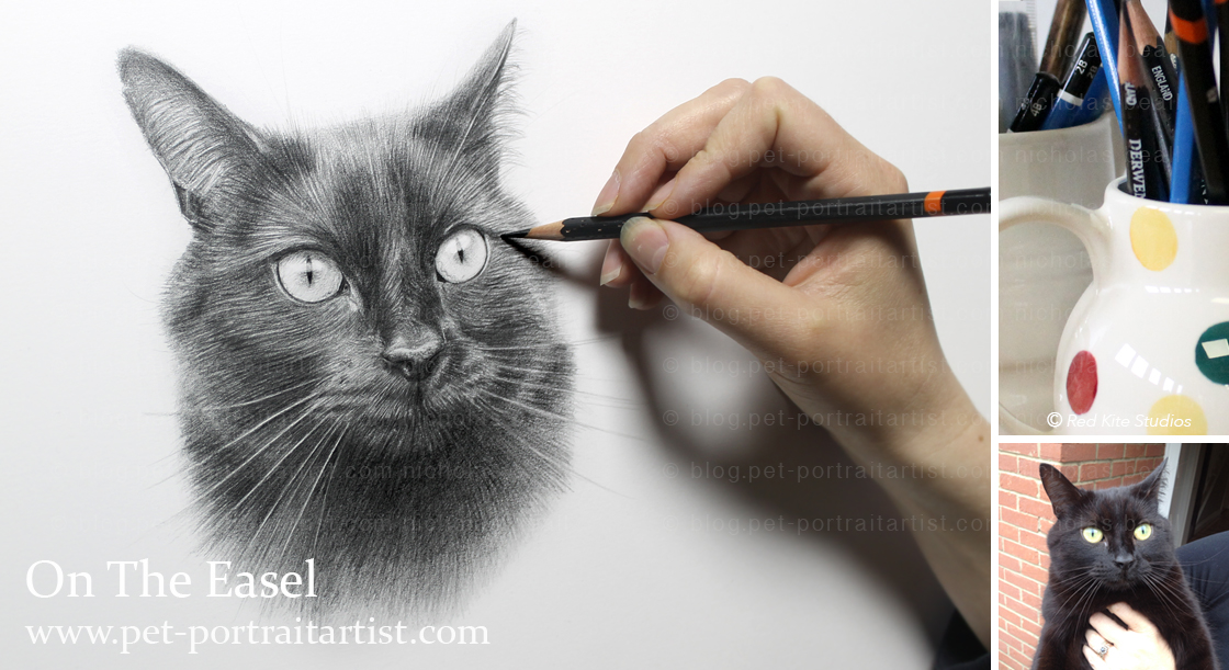 cat-pencil-pet-portraits-2