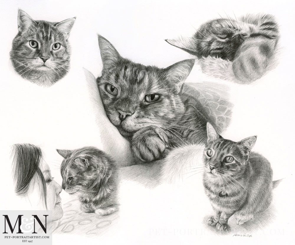 Cat Pencil Pet Portraits Montage
