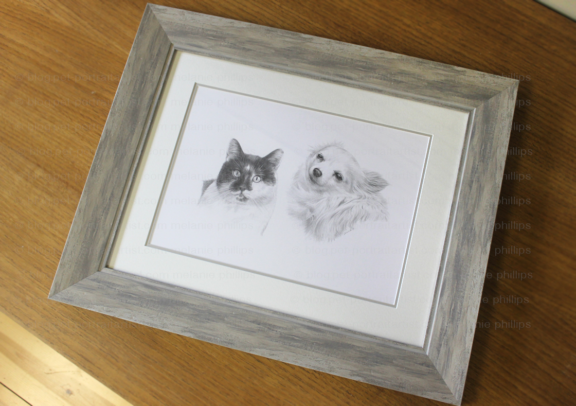 Dog and Cat Pencil Portrait