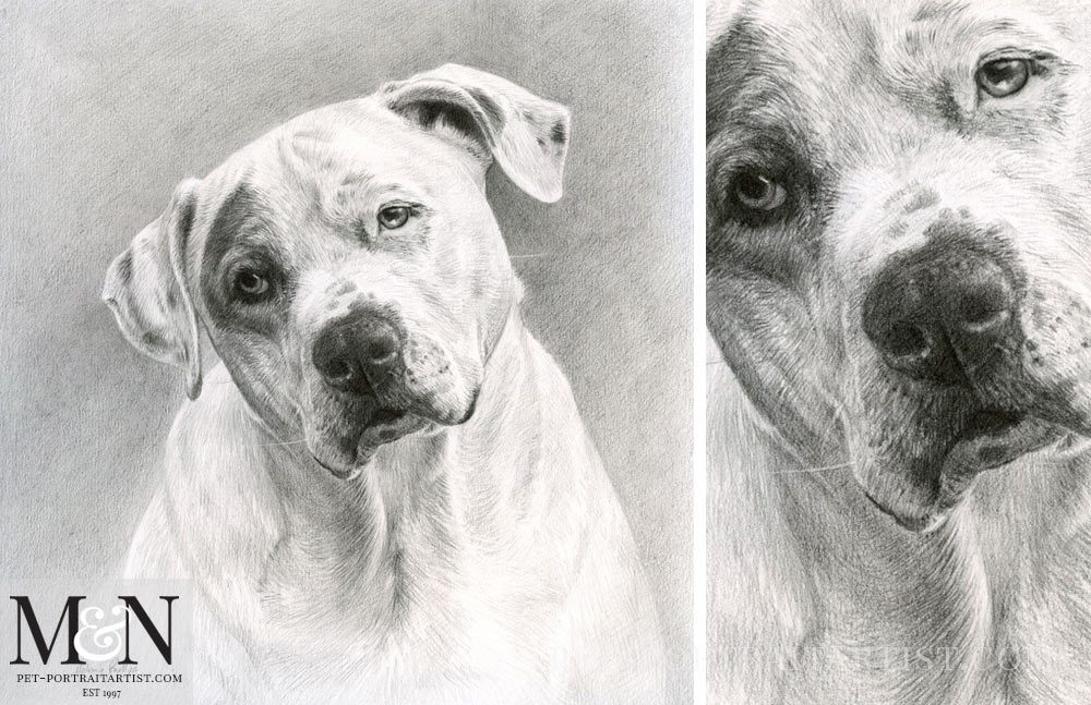 Pencil Pet Portrait of Kilo