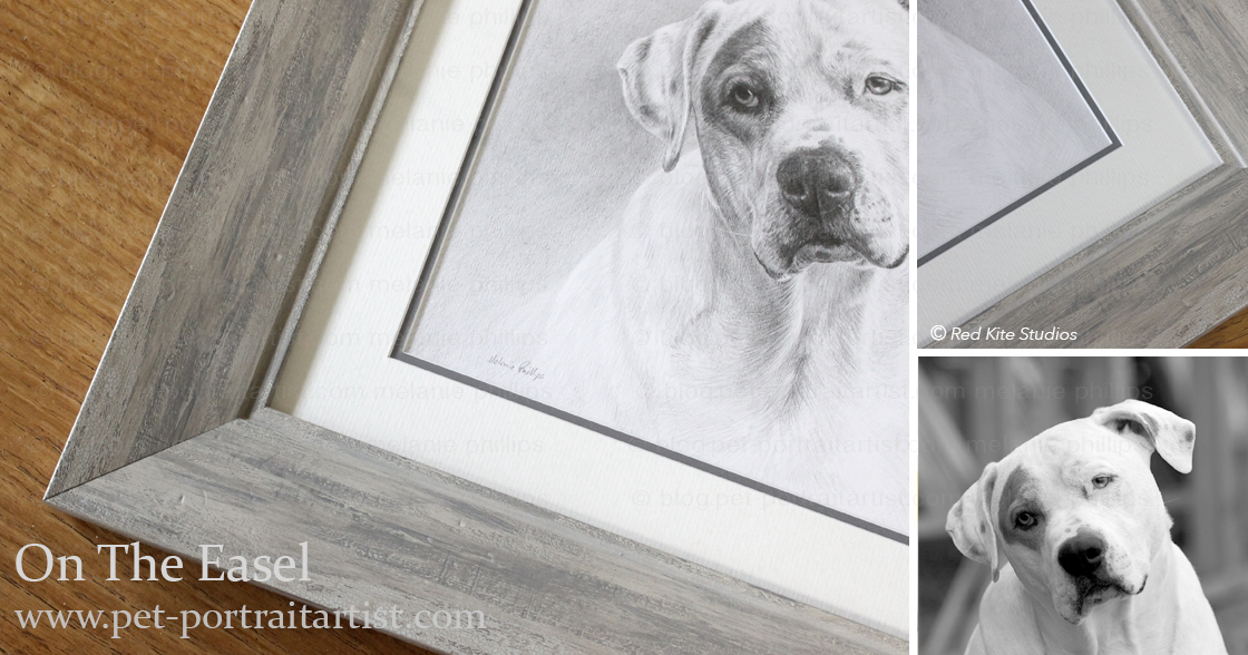 Pencil Pet Portrait of Kilo Framed
