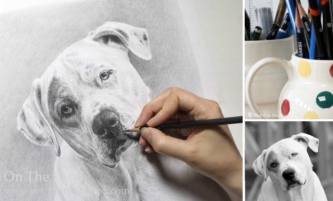 Pencil Pet Portraits of Kilo