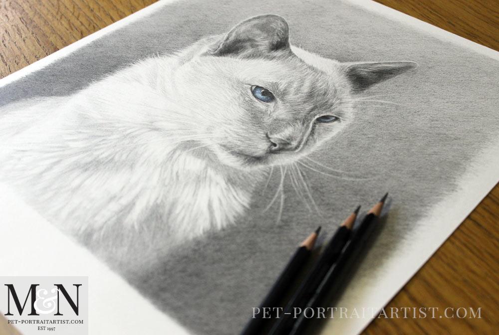 Cat Portrait of Max