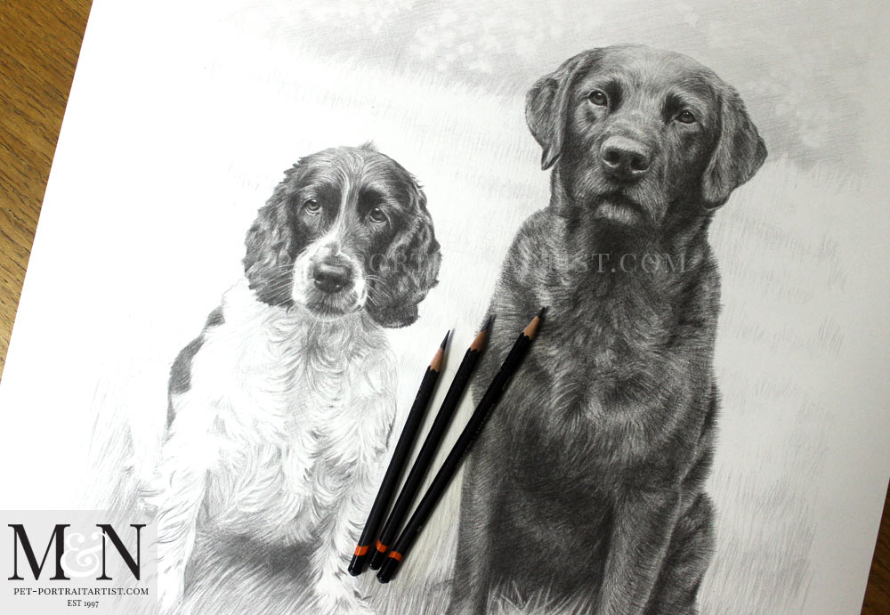 Pencil Pet Portraits of Stanley and Jarvis