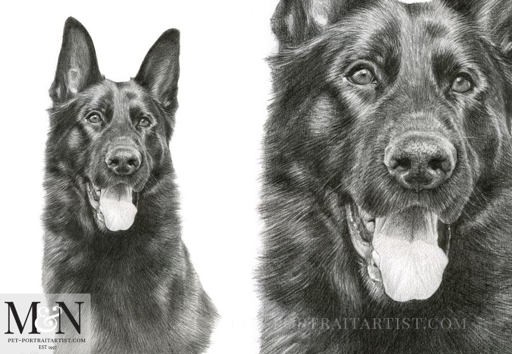 Dog Portrait of Django