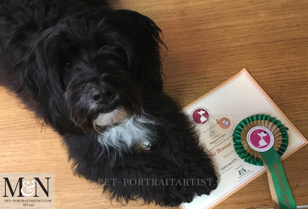 Lily the Tibetan Terrier