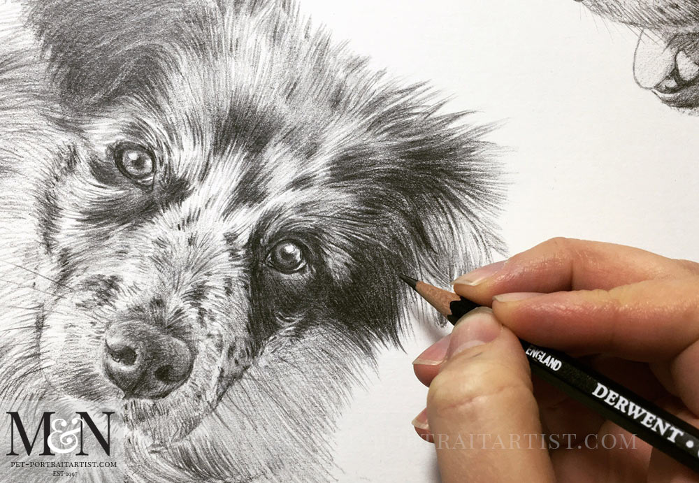 Dog Pencil Drawing of Mike