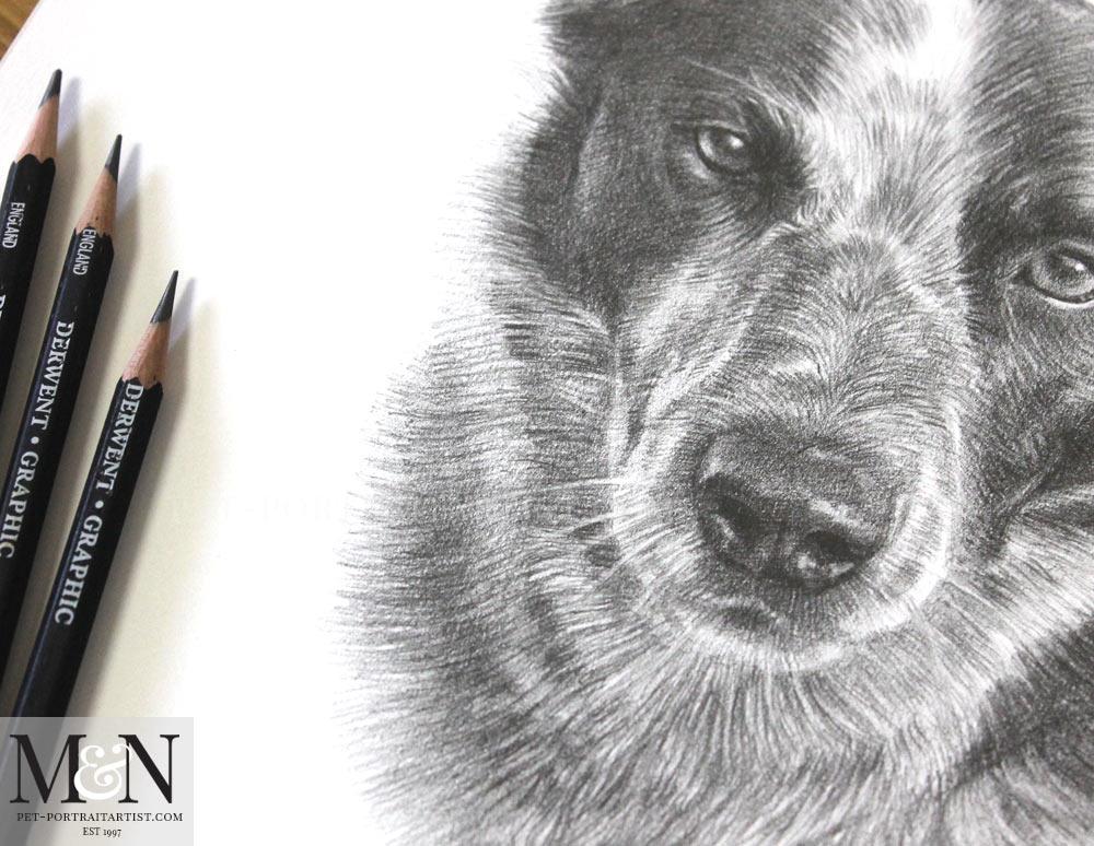 Pencil Portrait of Banjo