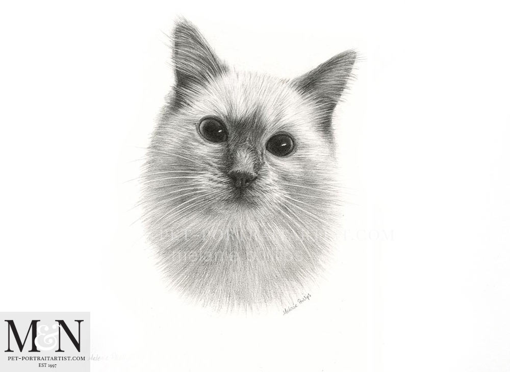 Cat Pencil Drawing of Padstow