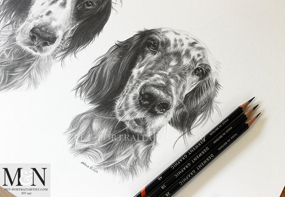 Pencil Drawing of English Setters