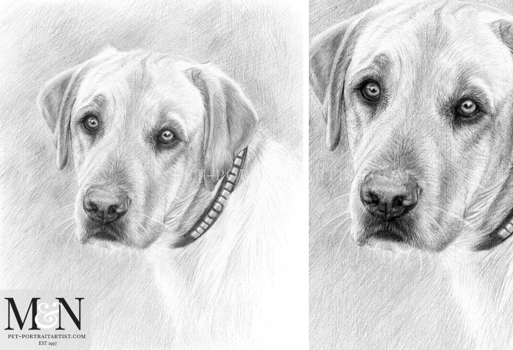 Pencil Pet Portrait of Gus