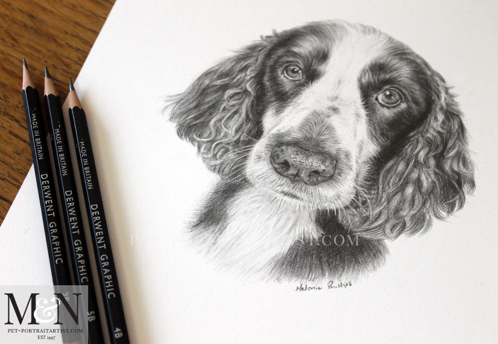 Pencil Pet Portrait of Spaniel