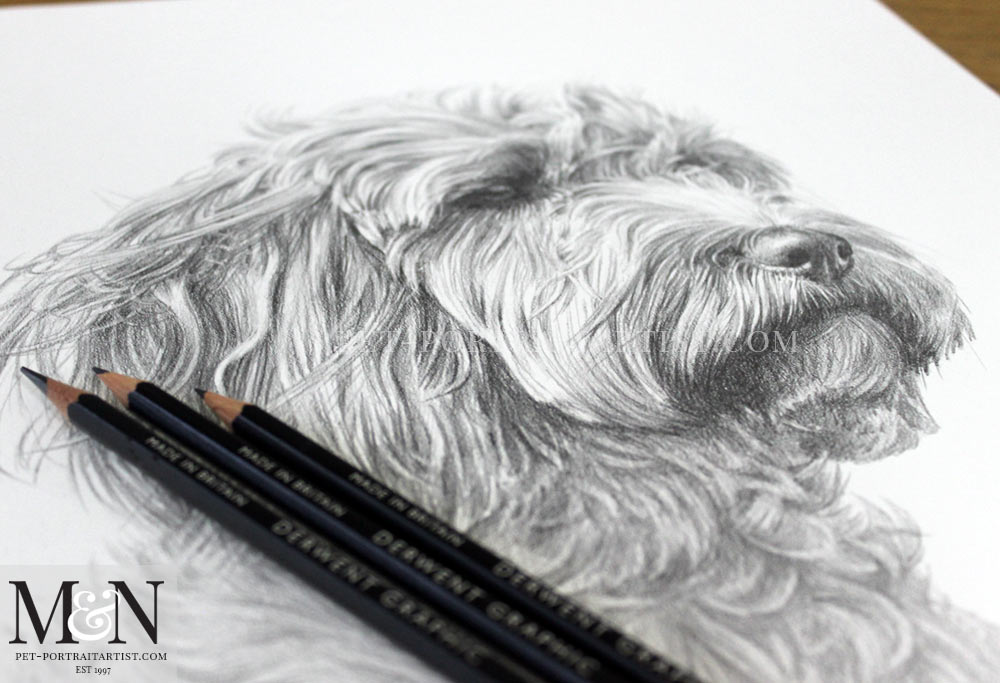 Pencil Pet Portrait of Ziggy