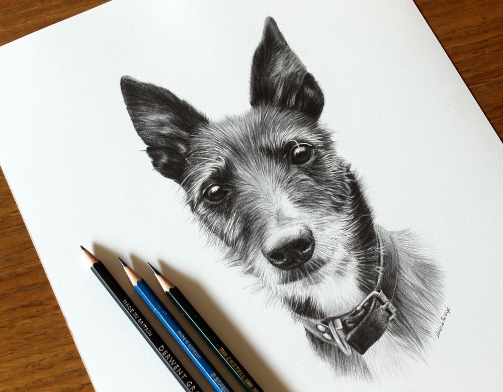Pencil Pet Portrait