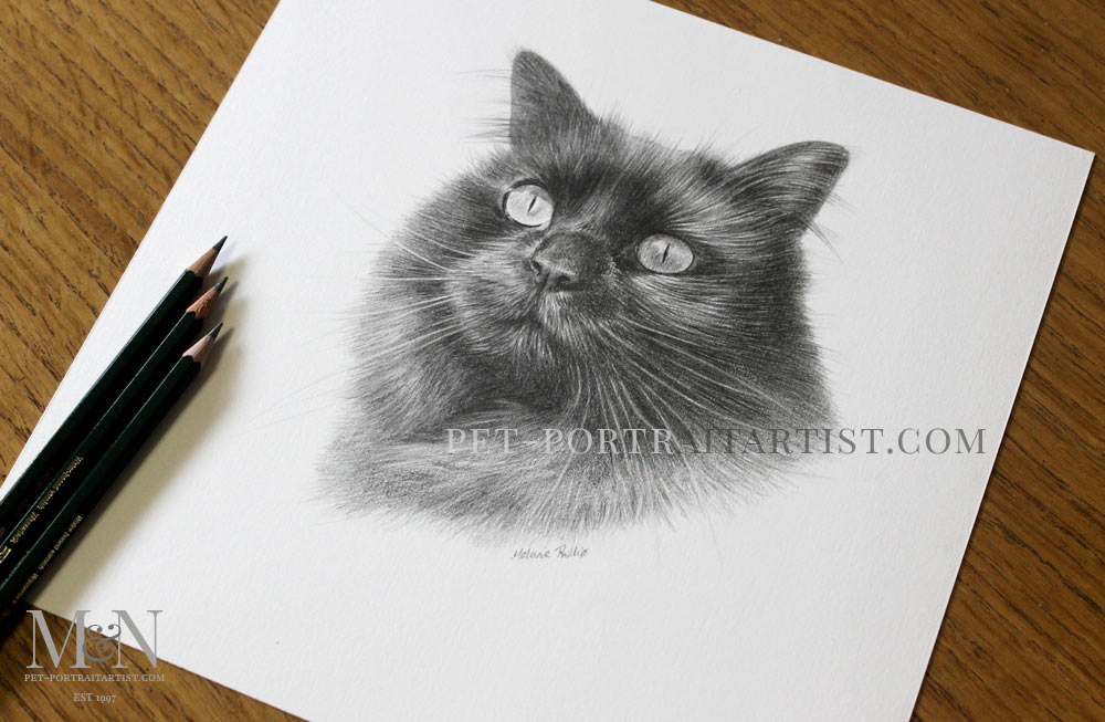 Cat Pencil Portrait of Penny