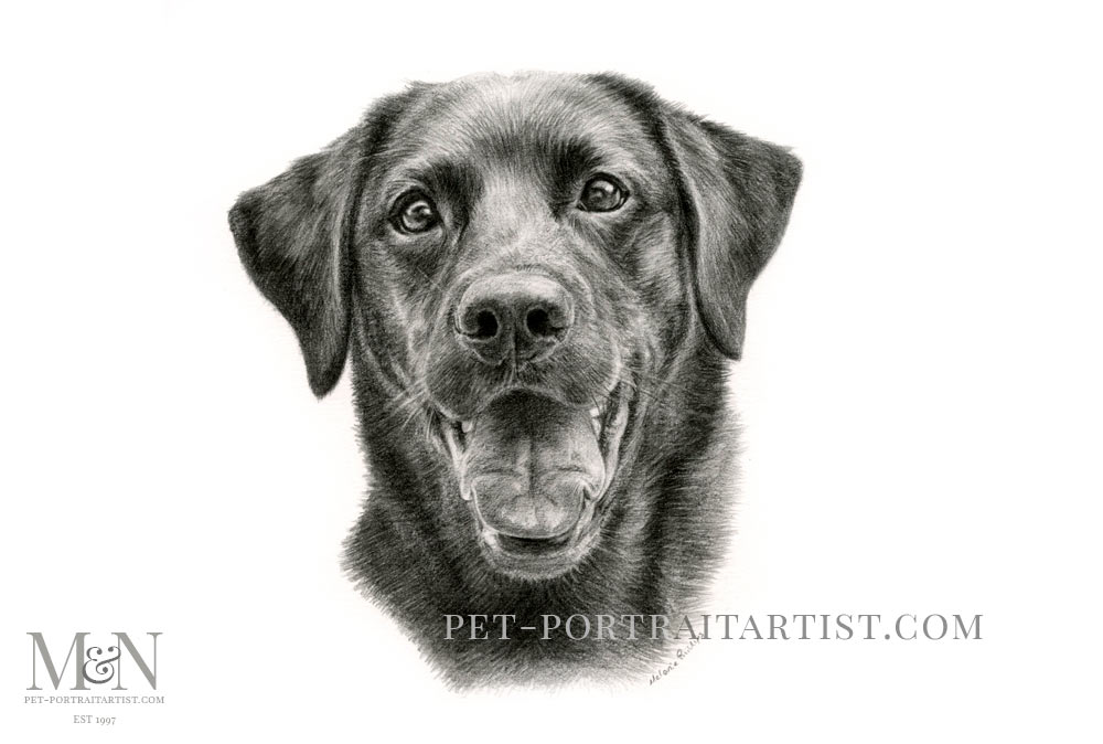 Pencil Pet Portrait of Tess