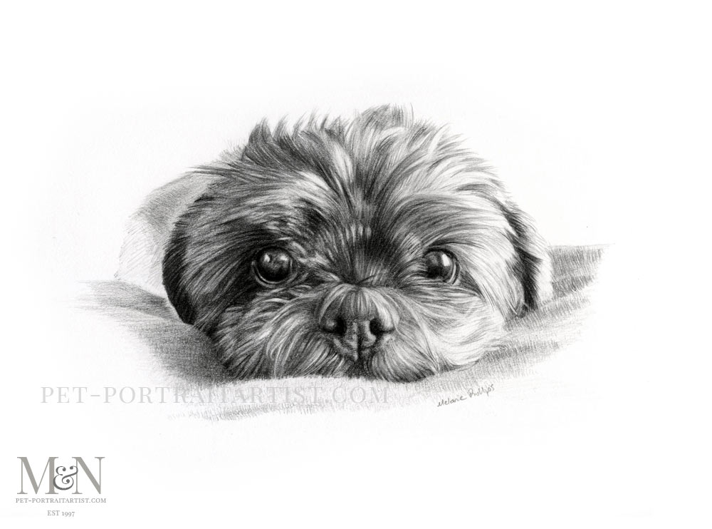 Pencil Pet Portrait of Henri Bell