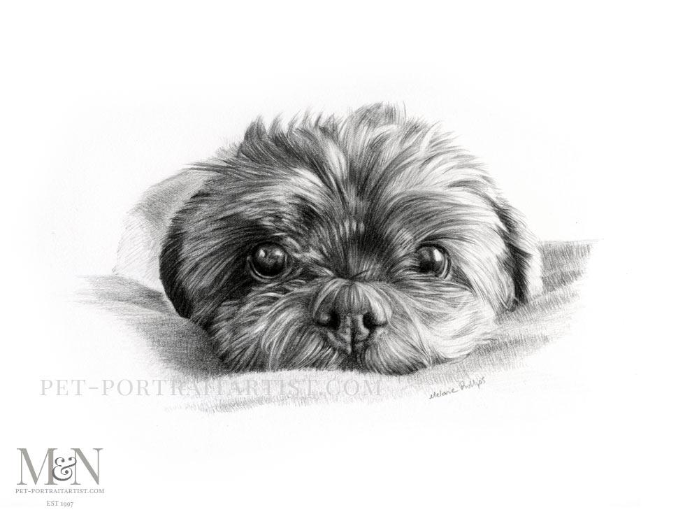 Pencil Pet Portrait of Henri Bell