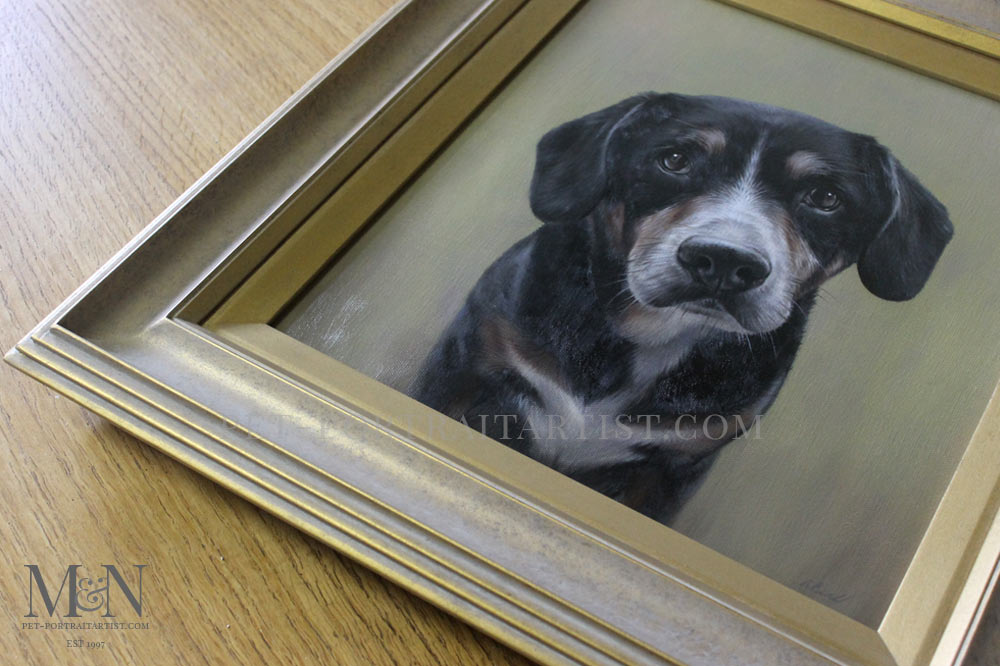 Pet Portrait of Lance