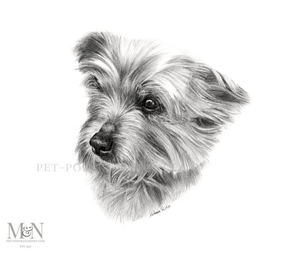 Pencil Pet Portrait of Poppy