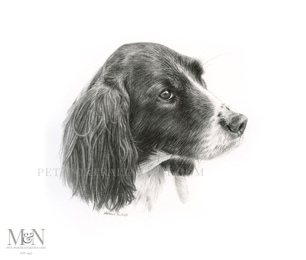 Pencil Pet Portrait of Sika