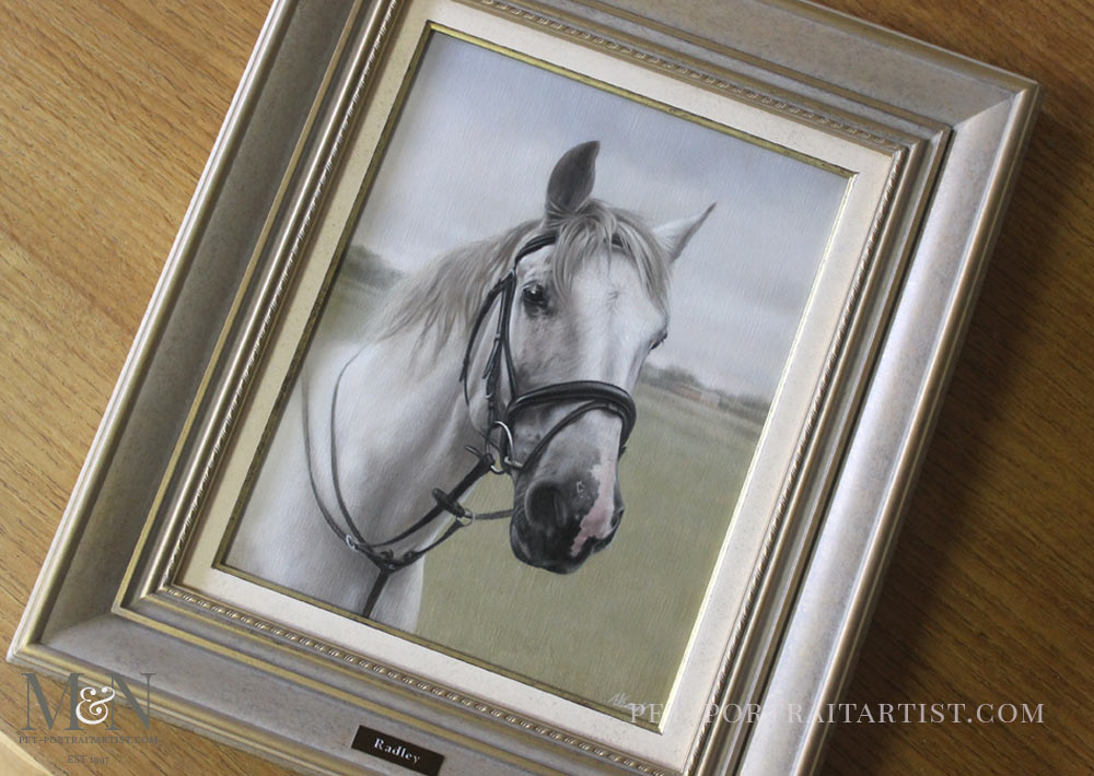 Horse Portrait of Radley