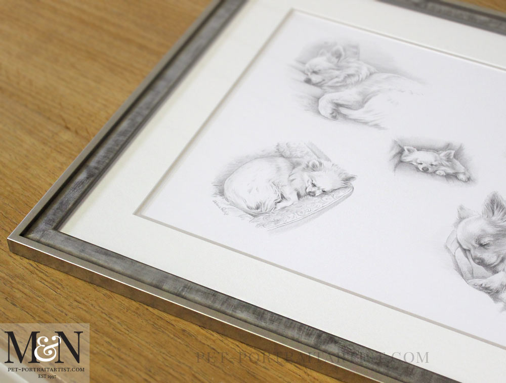 montage pet portrait framed