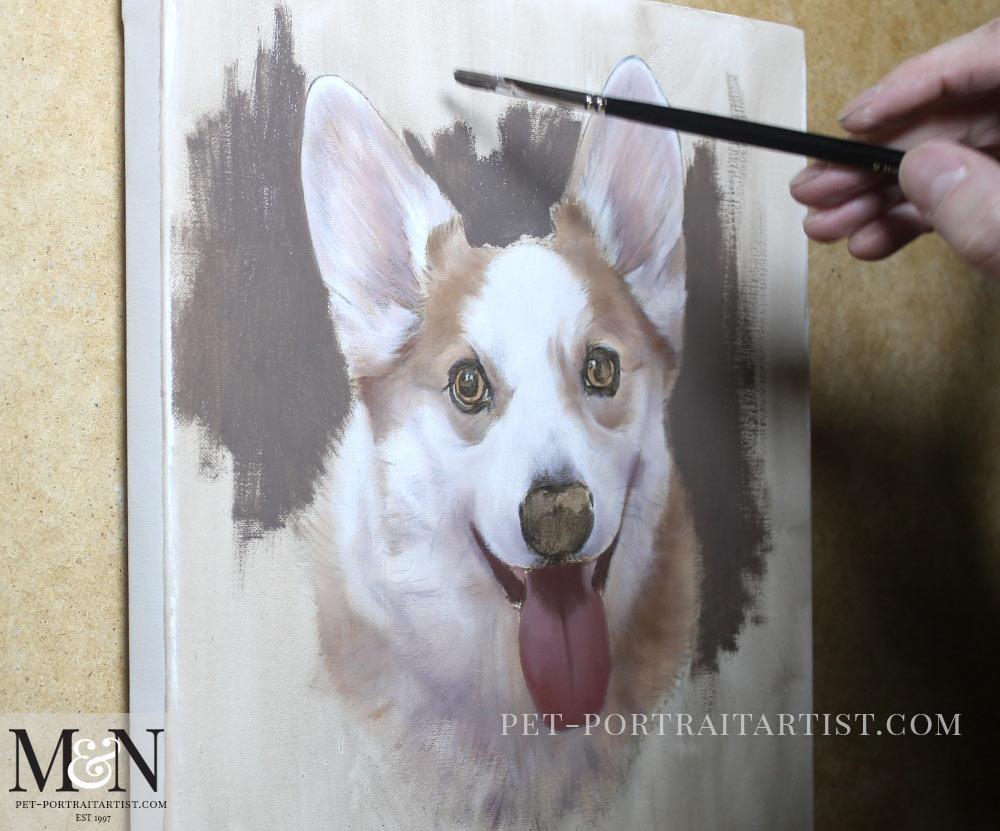 Corgi Pet Portraits